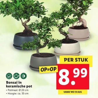 kamerplanten lidl folder week 34 2020