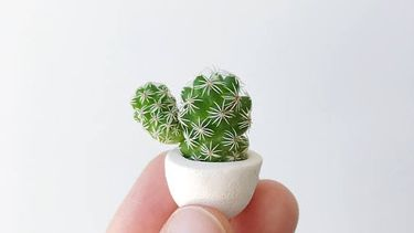 roomed-micro-cactus